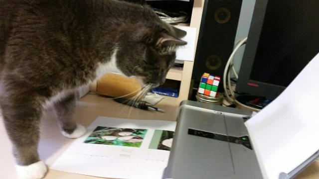 officecatapproves